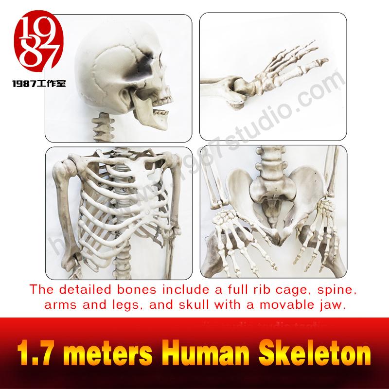 1 7 Meters Human Skeleton - Haunted House Prop - 1987 Studio